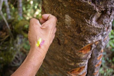 The ancient people used coloured sap from the trees to paint their carvings.
