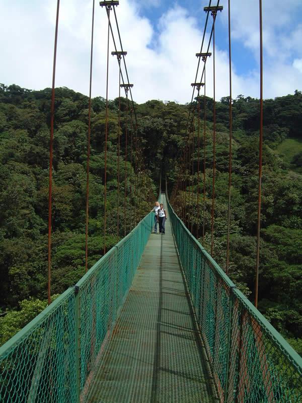 Hanging treetop bridge