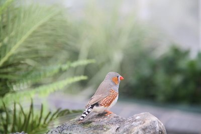 For my birdie friends