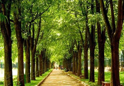 cubbon-park-medium.jpg