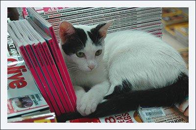 persian_cats.jpg