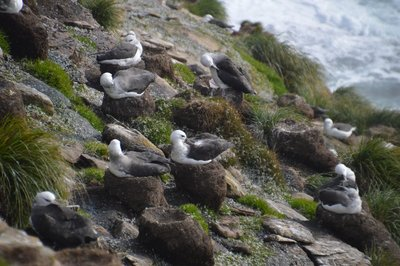 Albatross__7_.jpg