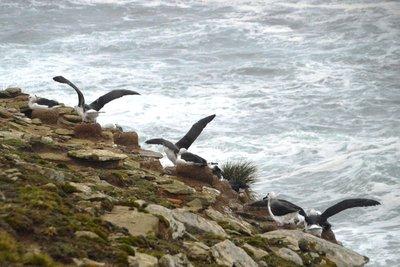 Albatross__8_.jpg