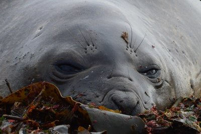 Elephant_Seals__9_.jpg