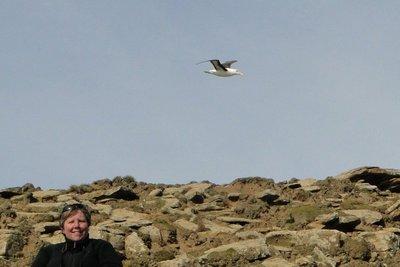 Flying_Albatross__4_.jpg