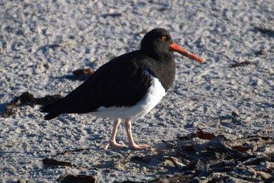 Other_Bird..catcher__1_.jpg