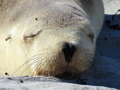 Seal Bay (20)