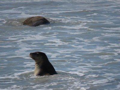 Seal Bay (22)