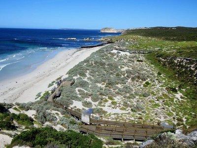 Seal Bay (32)