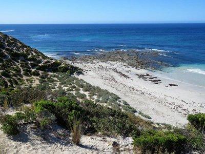 Seal Bay (34)