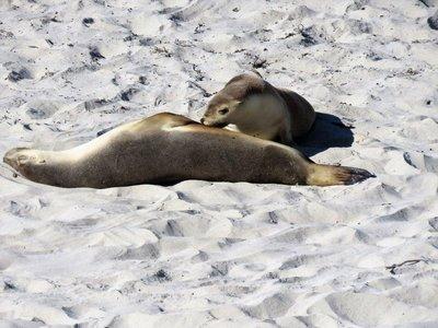 Seal Bay (4)