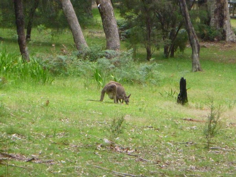 large_Animals_at..mpians___3_.jpg