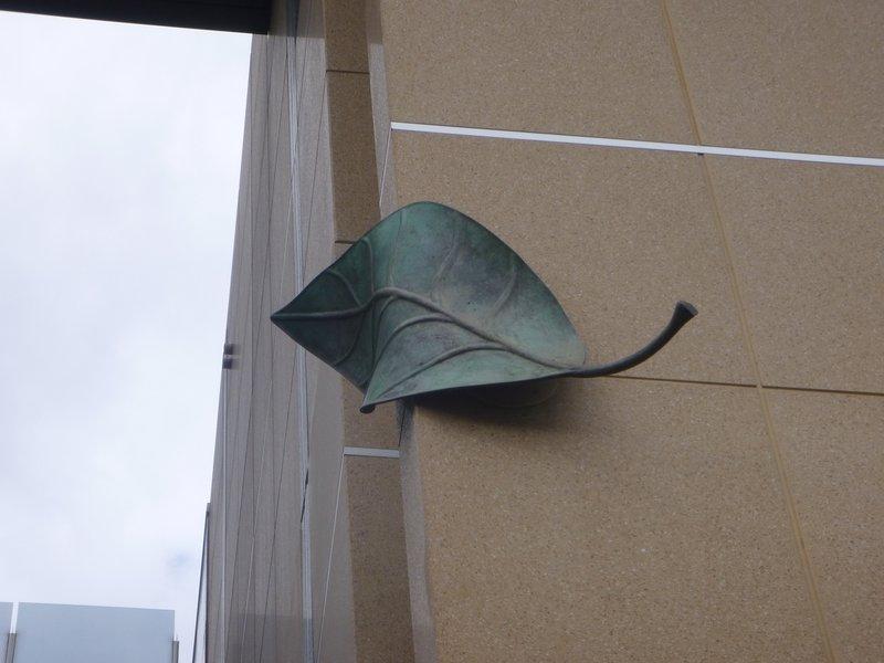 large_Big_Leaf_-_Adelaide_SA.jpg