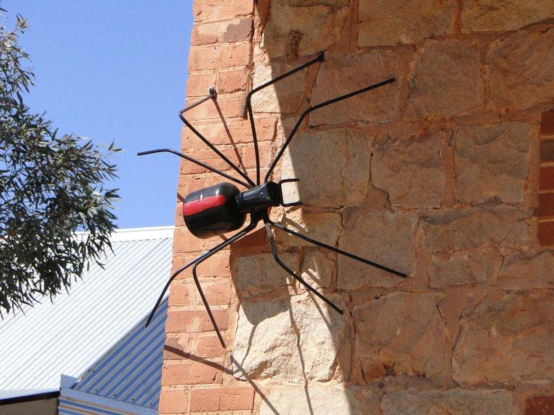 large_Big_Redbac..lverton_NSW.jpg