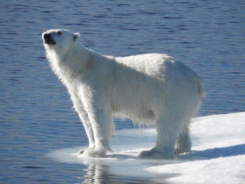 large_DSCN4270-Bear.jpg