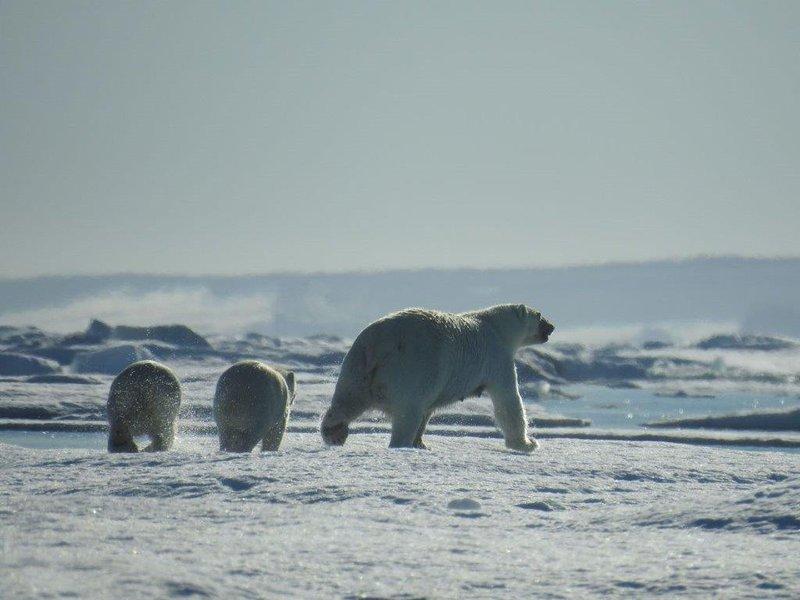 large_DSCN4358-Mother-n-Cubs.jpg