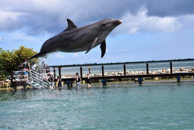 large_Dolphins__42_.jpg
