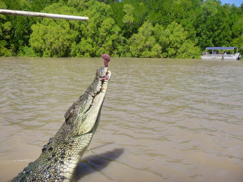 large_Jumping_Crocs_Darwin__17_.jpg