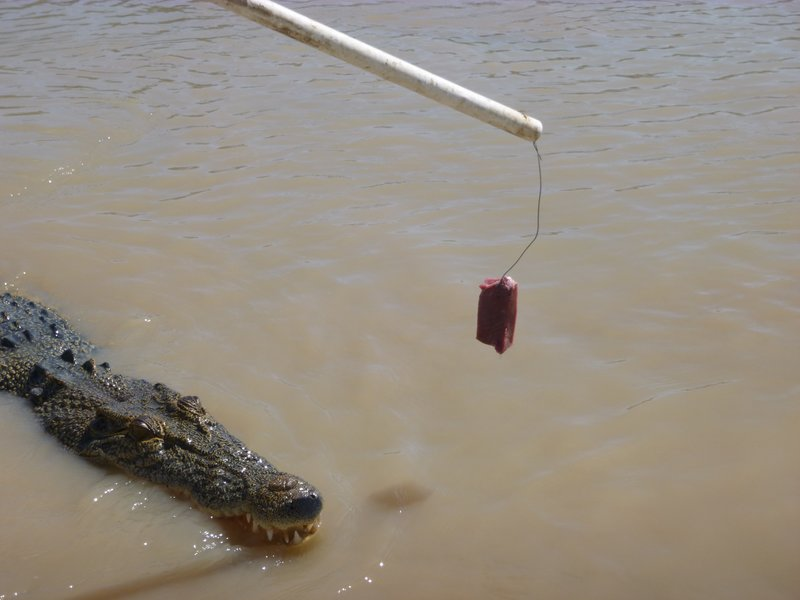 large_Jumping_Crocs_Darwin__1_.jpg