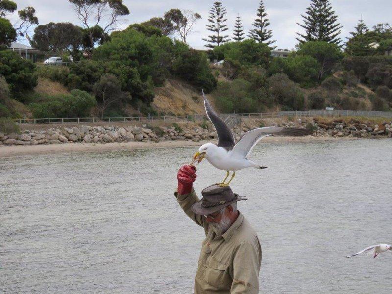 large_Pelican_Feeding__5_.jpg