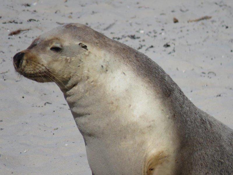 large_Seal_Bay__29_.jpg