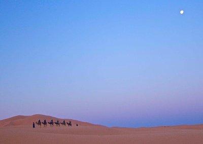 Camel train under full moon