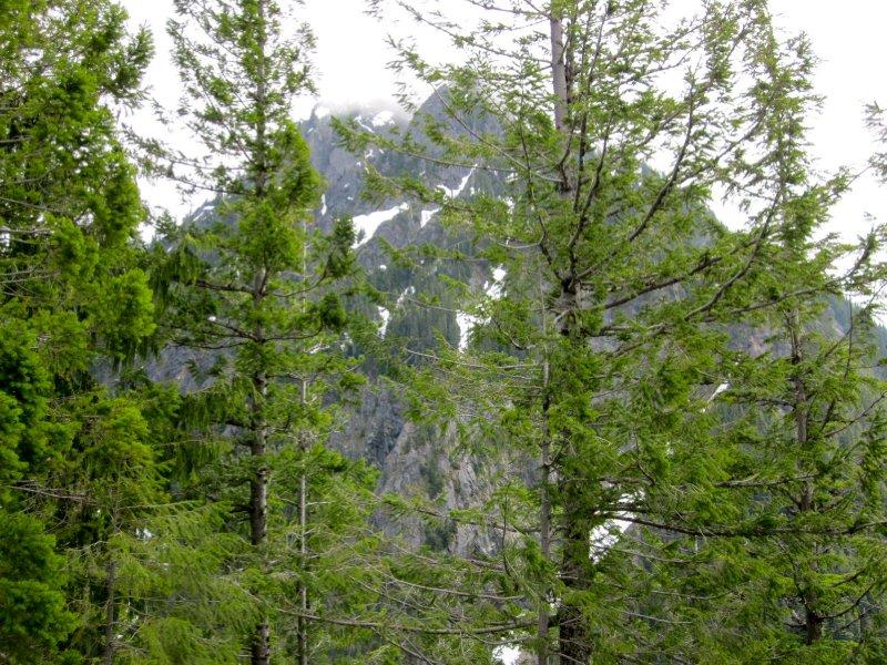 Mount Rainier National Park