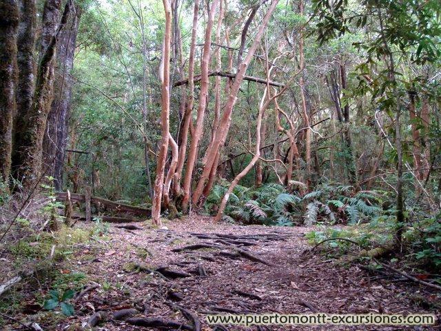 National Park Vicente Perez Rosales