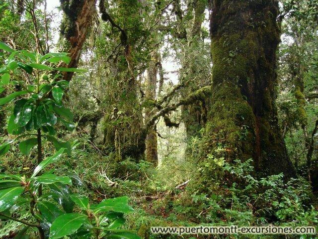 National Park Alerce Andino