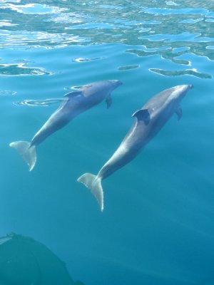 Playful dolphins...