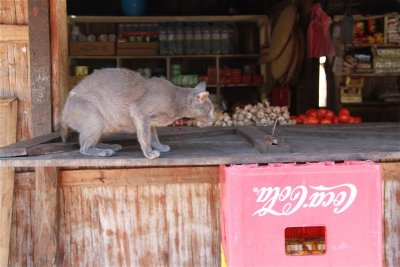 Rat protection in one of the grocery shop in Andranokoditra