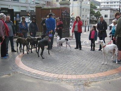 5-15 (21) Greyhound adoption event