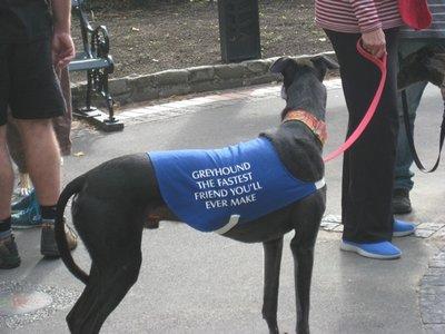 5-15 (22) Greyhound at Gardens