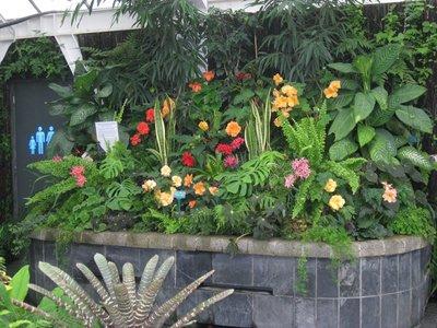 5-15 (37) Begonia garden