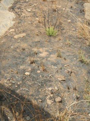 Spot_the_Landmine.jpg