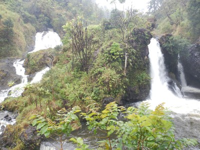 Of the dozens of waterfalls on the Road to Hana, Hanawi Falls was one of my favorites; maybe it struck the non-conformist chord in me