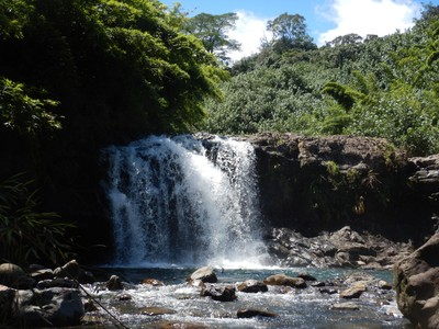 We had a gorgeous day for our Four Waterfalls Hike; all along the west coast of Maui we spotted humpback whales which spend the winter here before migrating to Alaska for the summer