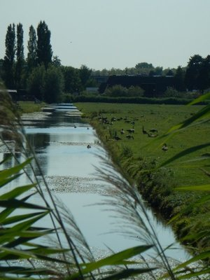 There were lots of geese and ducks around the windmills and plenty in the canals in towns too; there are no fences around the polders so I assume the sheep and cows don't swim