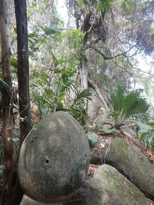 Throughout the park boulders were scattered everywhere; at times you would even see large trees seemingly growing out of them like the one in the background here