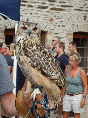 I wonder if this great horned owl can smell the PowerBar in my backpack; you could pay to have the owl perch on your arm (I'd rather the owl be in the wild!)
