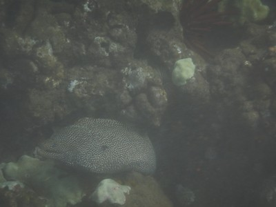 This was one of only two eels I saw during two weeks in Maui (I never saw a shark or a ray); the other eel was swimming in a tide pool in Hana