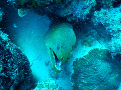 Green moray eel; there is no public transit on the island so getting a rental car is essential