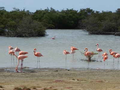 In 1969 a flamingo nesting sanctuary was established, the first such nature preserve in the Caribbean
