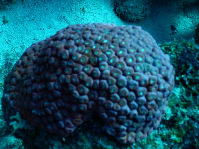 Elliptical star coral is slow growing and highly susceptible to white plague (in 1995 75% o the species in Florida was killed); Bonaire uses the US dollar as its currency