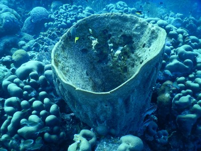 Barrel sponge; I have a hard time distinguishing between corals and sponges since to me they seem structurally similar