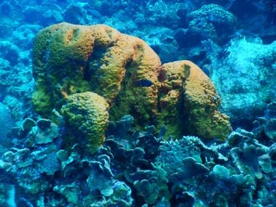 Orange elephant ear sponge; for diving emergencies, the island has a hyperbaric chamber
