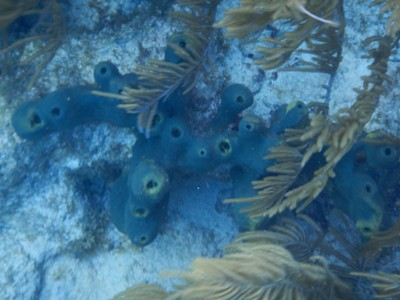Beginnings of blue pipe sponge maybe?; the American army built the Flamingo Airport as an air force base during WW2; many German and Austrian citizens were interned in a camp on Bonaire for the war's duration