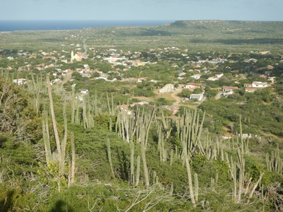 In 1526 the Spaniards settled Bonaire thinking the island could be a cattle plantation; they settled in Rincon which was in the center of the island and safe from pirate attack