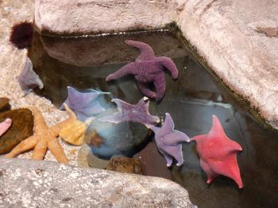 Sea stars; the Georgia Aquarium is the number 1 attraction in Atlanta according to TripAdvisor