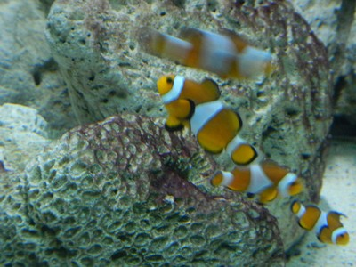 Clownfish; this aquarium is pretty dated with small tanks and many missing identification labels
